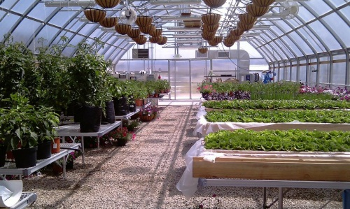Greenhouse photo 2012