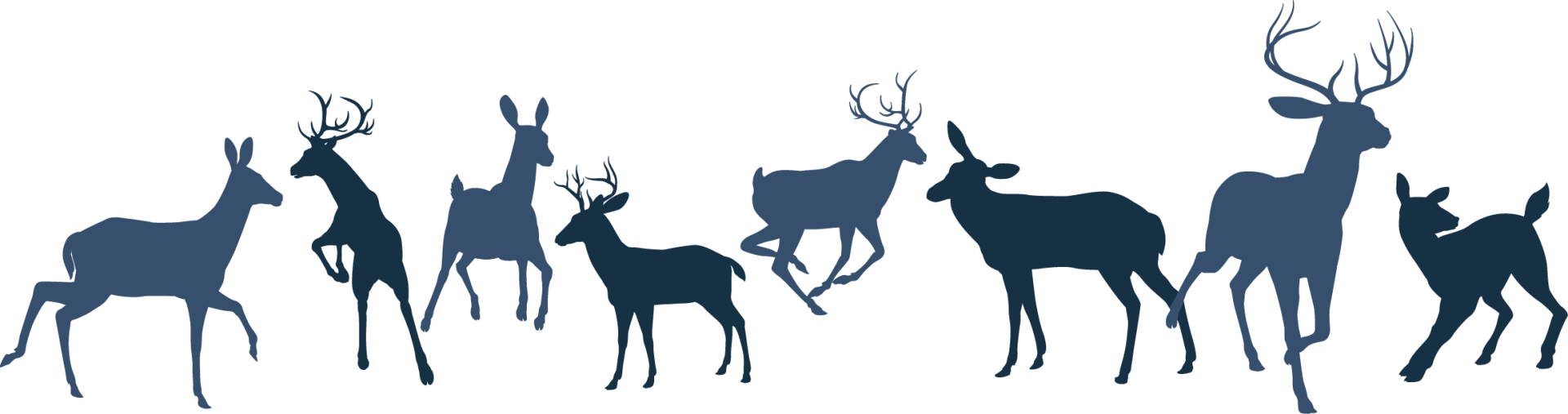 deer website banner