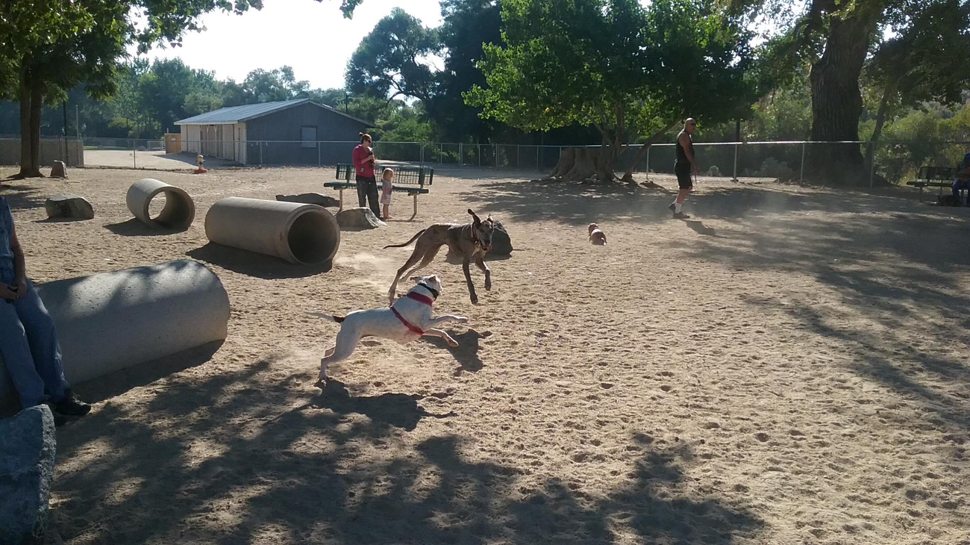Dog Park Picture #1