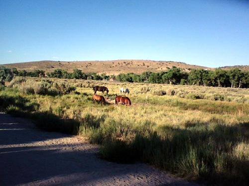 Mustangs #3